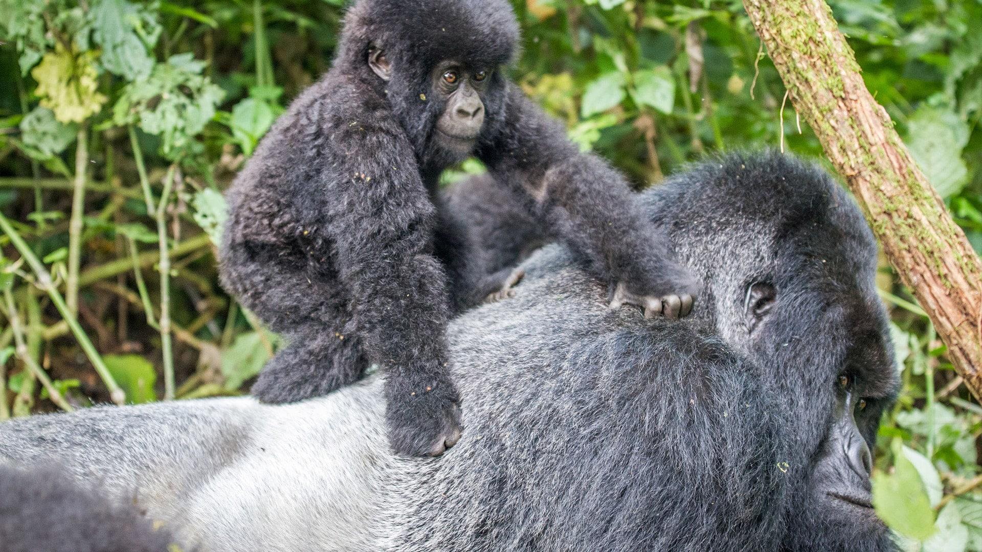 Primates naturaleza antropología comunicación