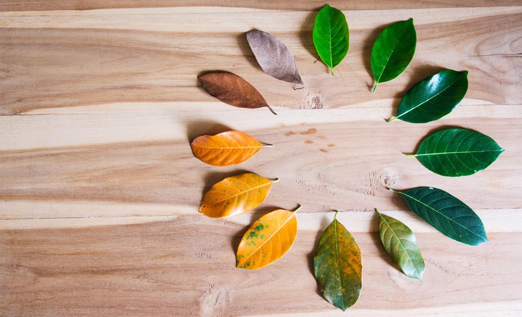 hojas naturaleza