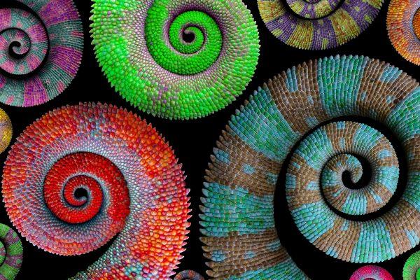 Camaleones de colores experiencia